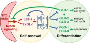 RNA network illustration