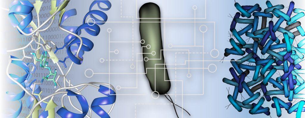 Raman research image