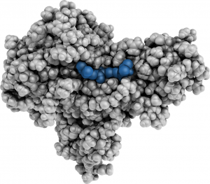 Image of protein structure