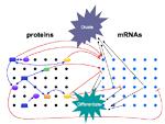 cartoon for RNA circuitry